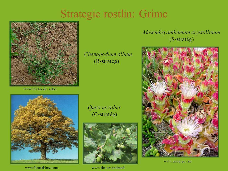 Strategie rostlin: Grime