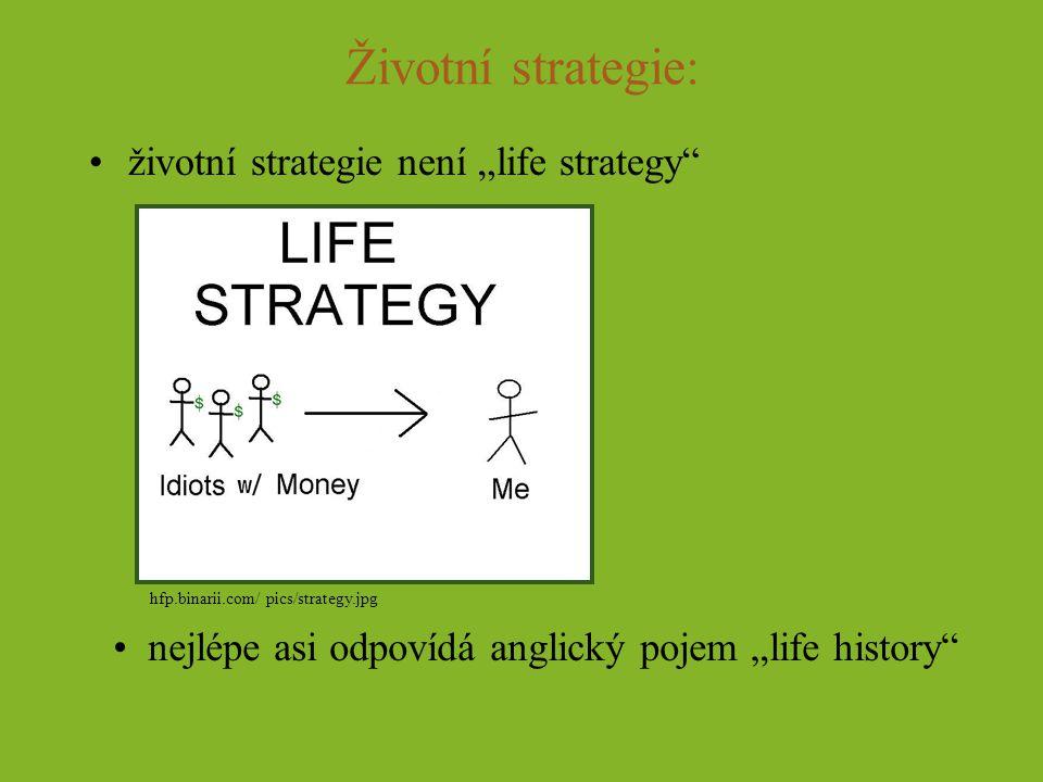 """Životní strategie: životní strategie není """"life strategy"""