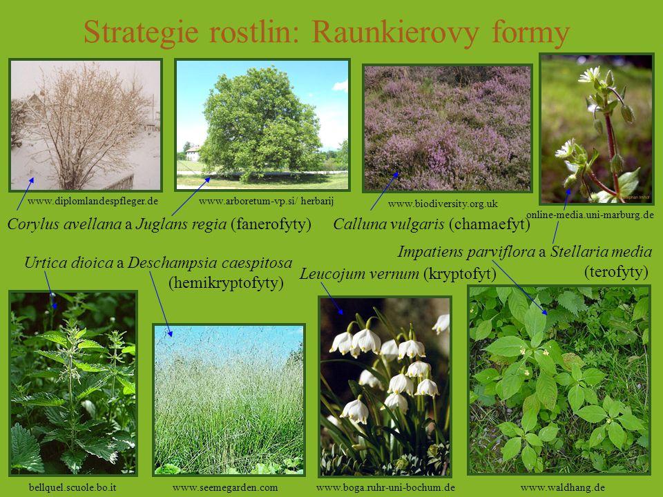 Strategie rostlin: Raunkierovy formy