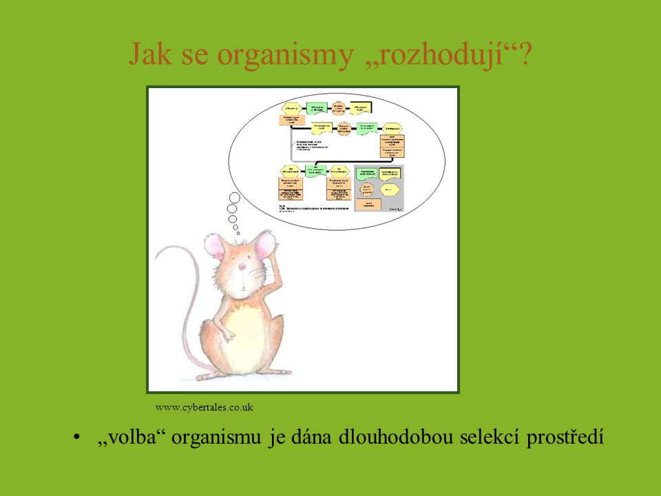 """Jak se organismy """"rozhodují"""