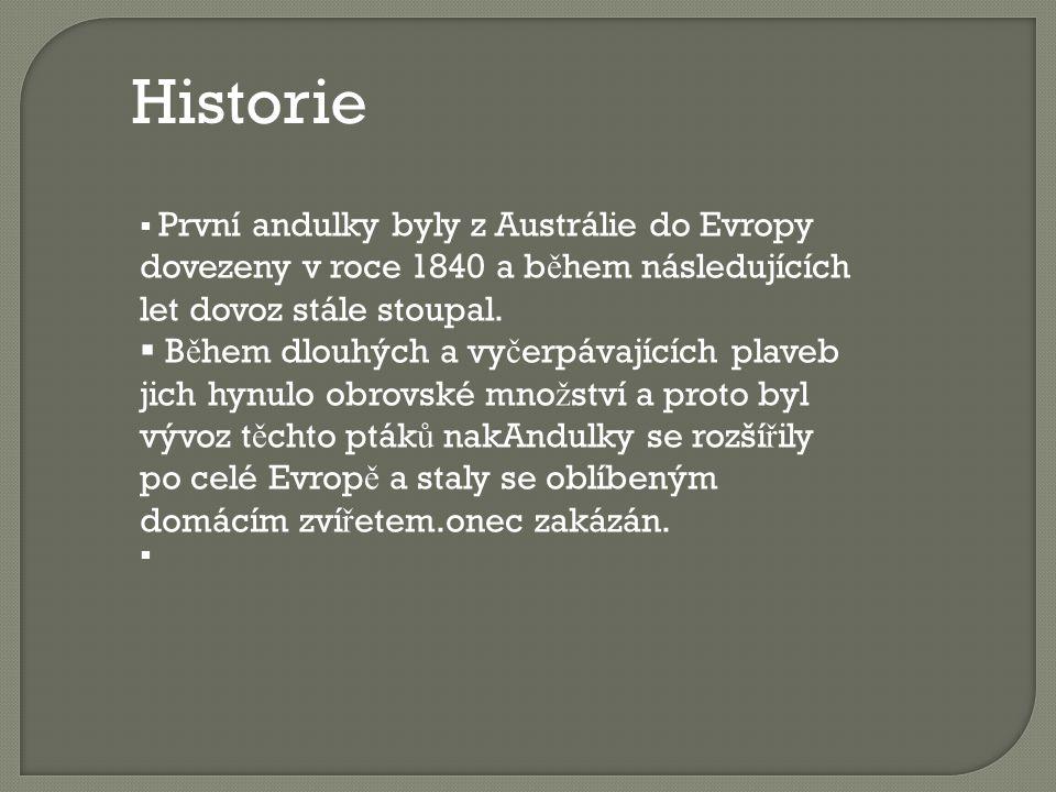 Historie První andulky byly z Austrálie do Evropy dovezeny v roce 1840 a během následujících let dovoz stále stoupal.