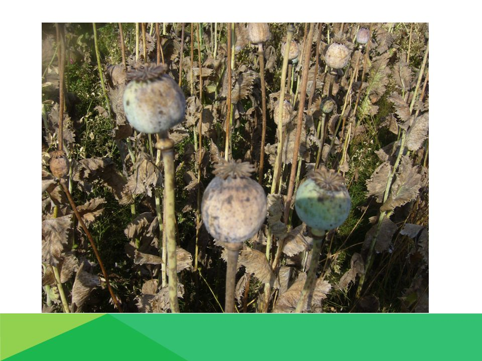 Výživa a hnojení :