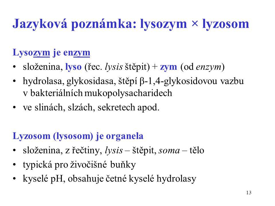 Jazyková poznámka: lysozym × lyzosom