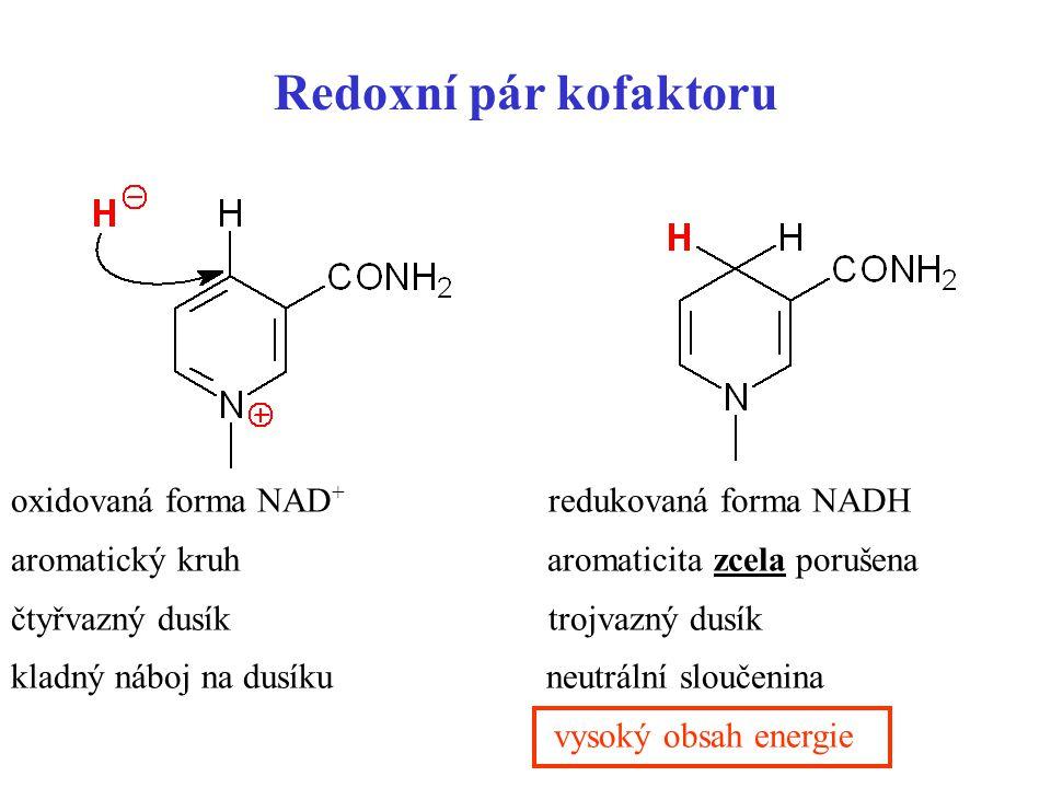 Redoxní pár kofaktoru oxidovaná forma NAD+ redukovaná forma NADH