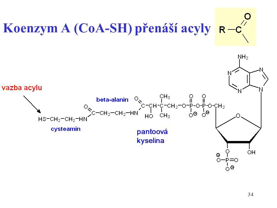 Koenzym A (CoA-SH) přenáší acyly