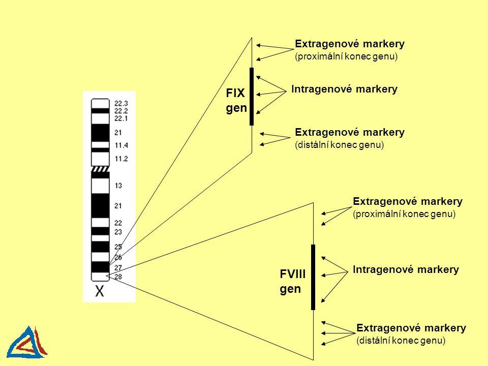 FIX gen FVIII gen Extragenové markery (proximální konec genu)