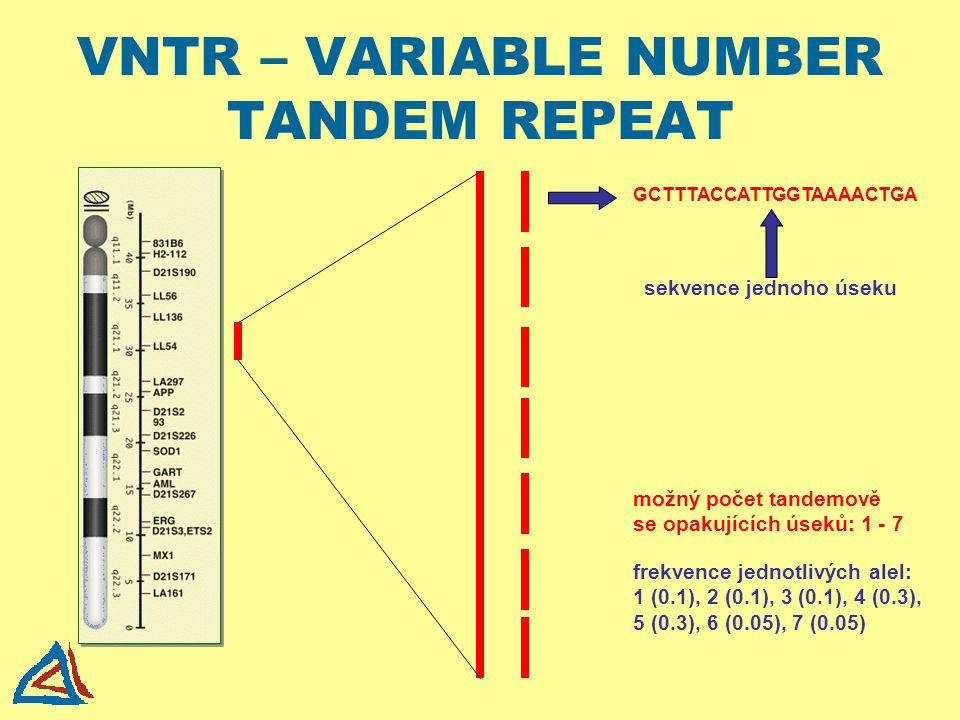 VNTR – VARIABLE NUMBER TANDEM REPEAT