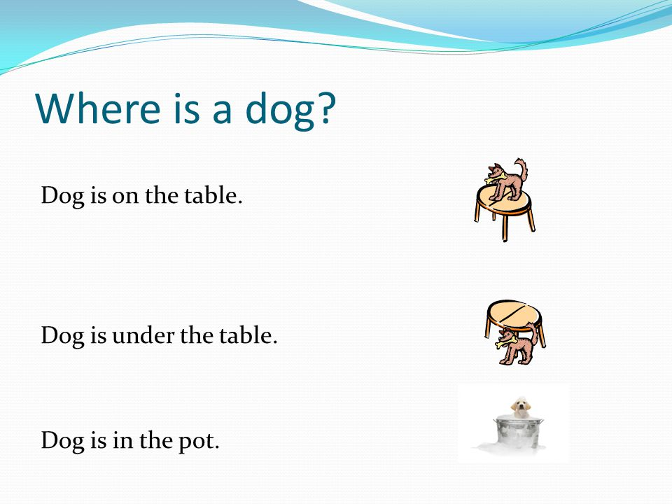 Where is a dog Dog is on the table. Dog is under the table.