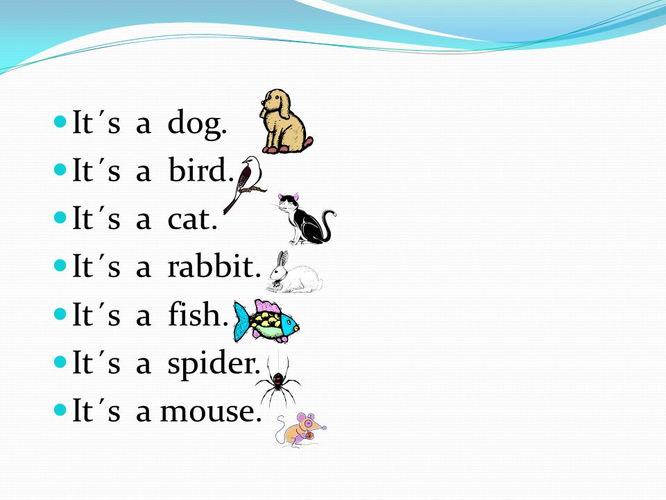It´s a dog. It´s a bird. It´s a cat. It´s a rabbit.