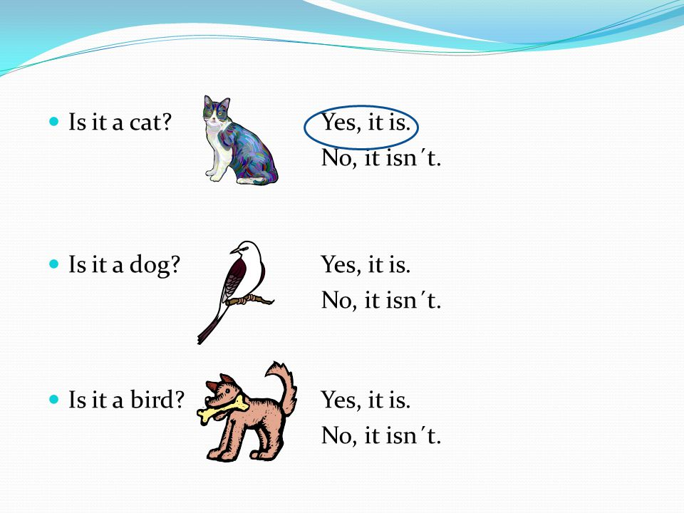 Is it a cat Yes, it is. No, it isn´t. Is it a dog Yes, it is. Is it a bird Yes, it is.