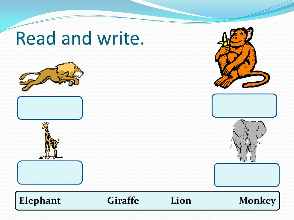 Read and write. Elephant Giraffe Lion Monkey