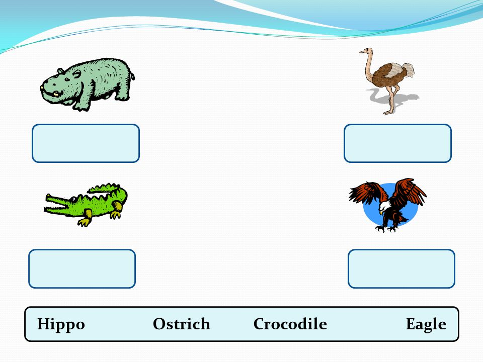 Hippo Ostrich Crocodile Eagle