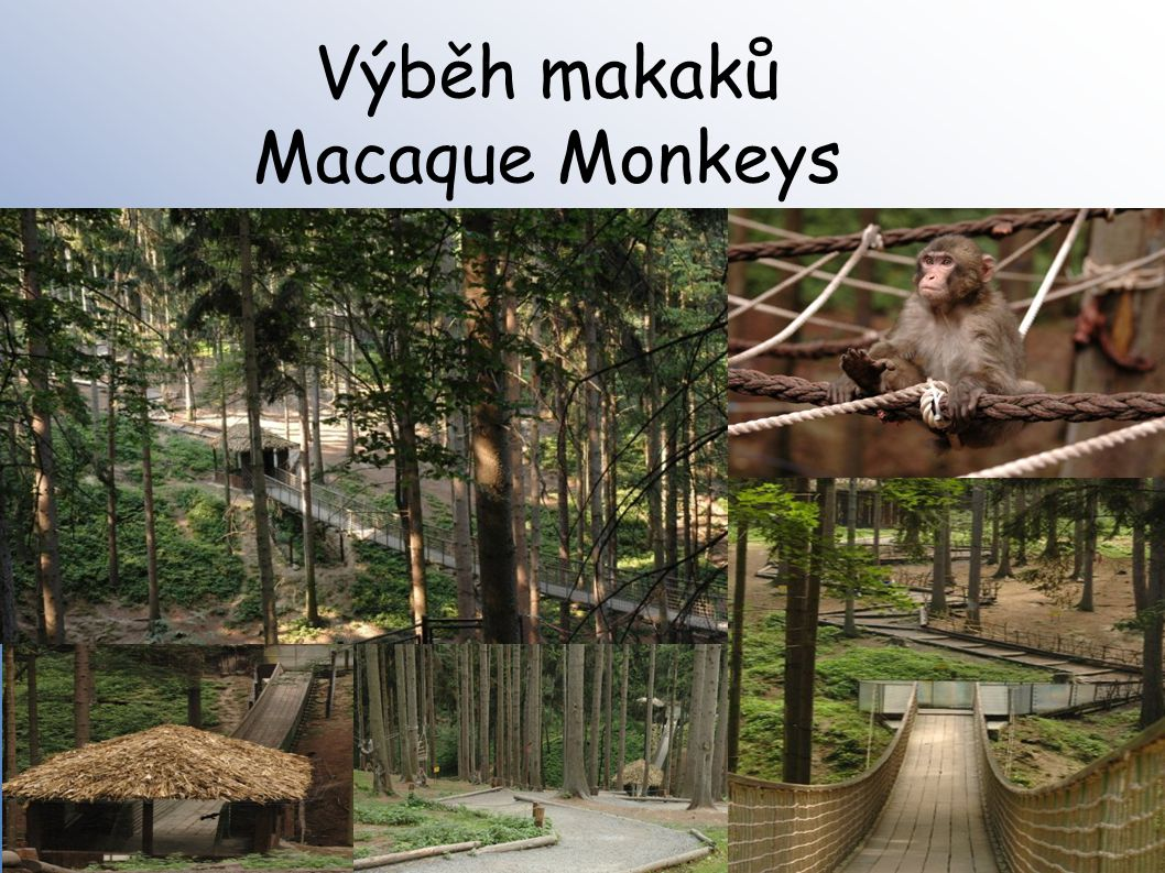 Výběh makaků Macaque Monkeys