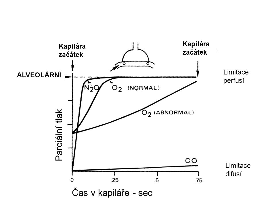 Parciální tlak Čas v kapiláře - sec Kapilára začátek Limitace