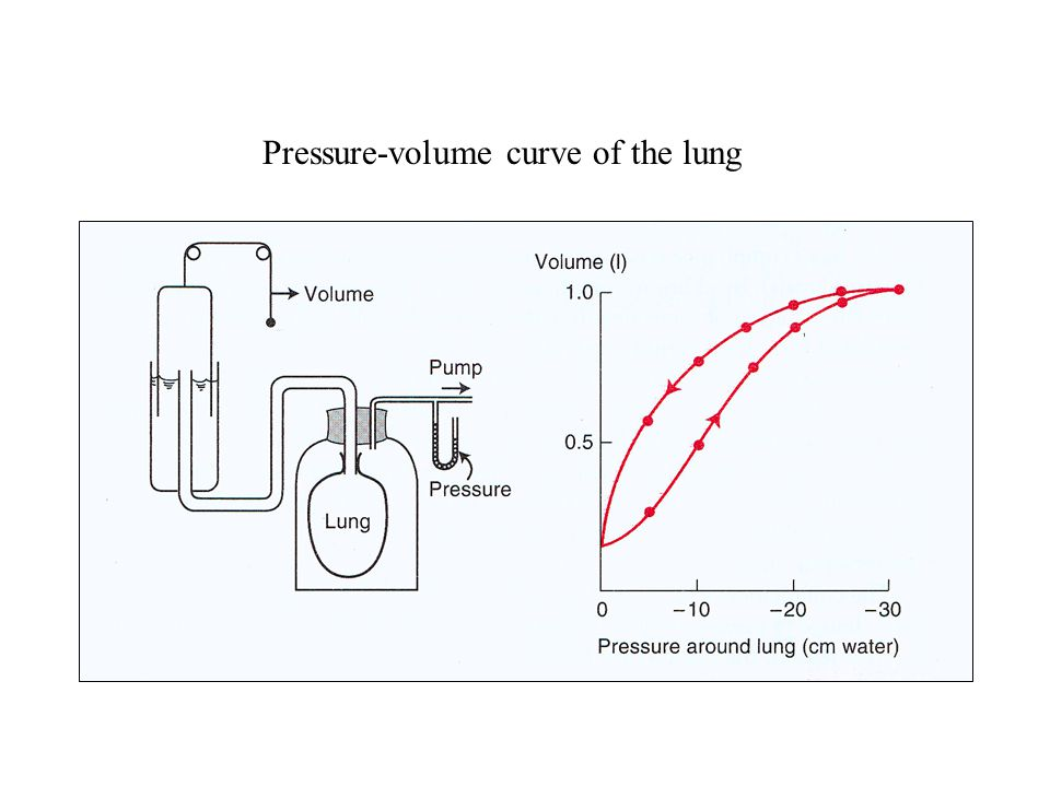 Pressure-volume curve of the lung
