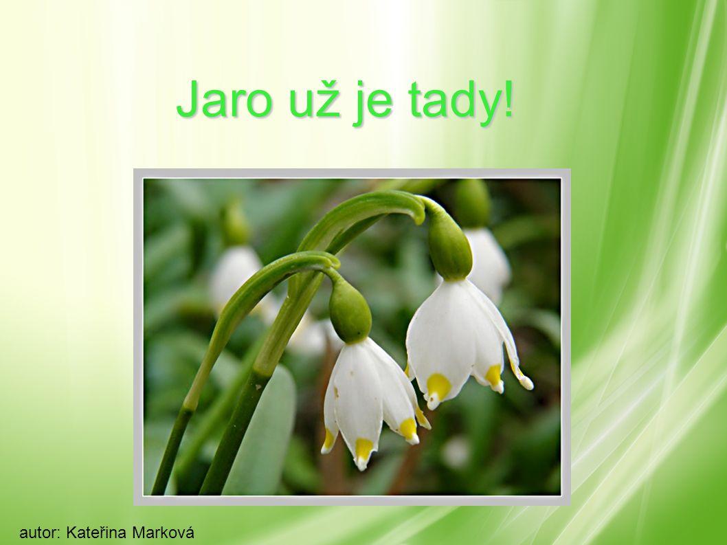 Jaro už je tady! autor: Kateřina Marková