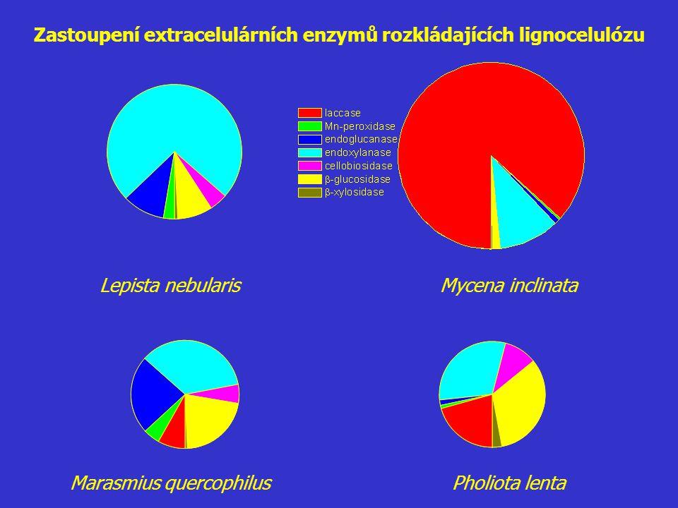 Zastoupení extracelulárních enzymů rozkládajících lignocelulózu