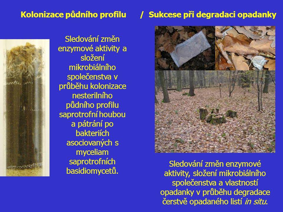 Kolonizace půdního profilu / Sukcese při degradaci opadanky