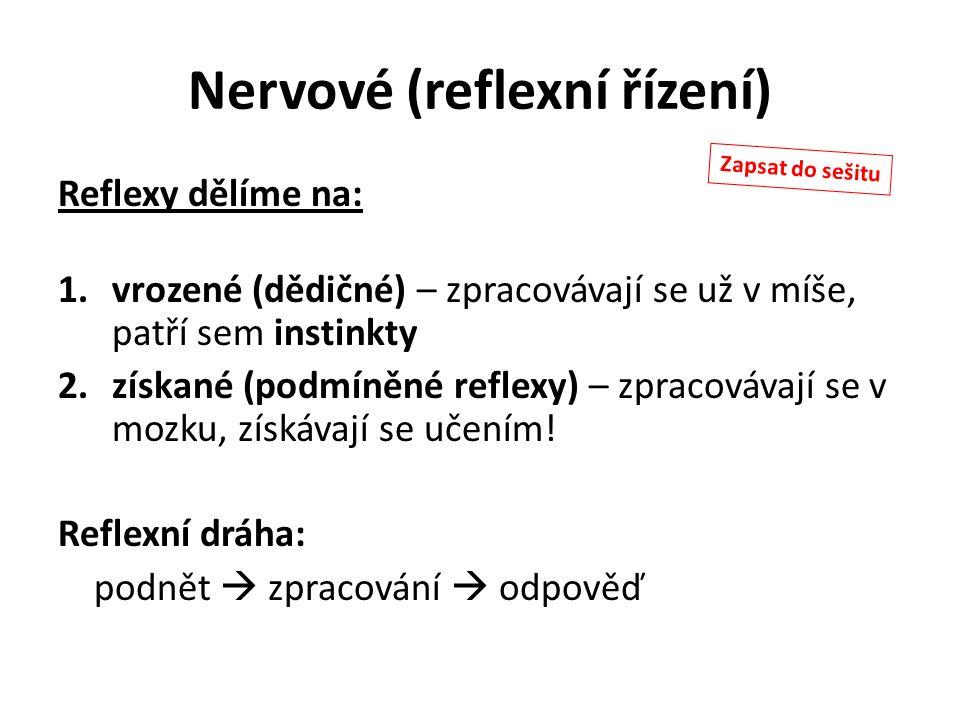 Nervové (reflexní řízení)