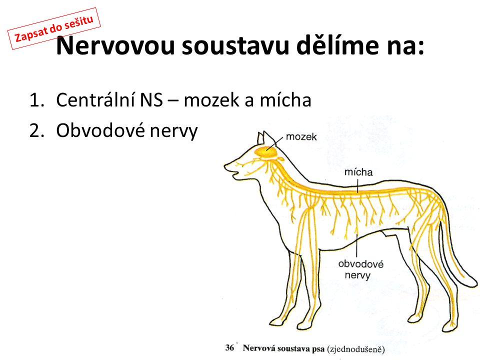 Nervovou soustavu dělíme na: