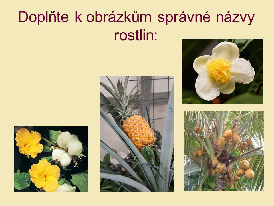 Doplňte k obrázkům správné názvy rostlin: