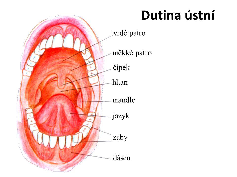Dutina ústní tvrdé patro měkké patro čípek hltan mandle jazyk zuby
