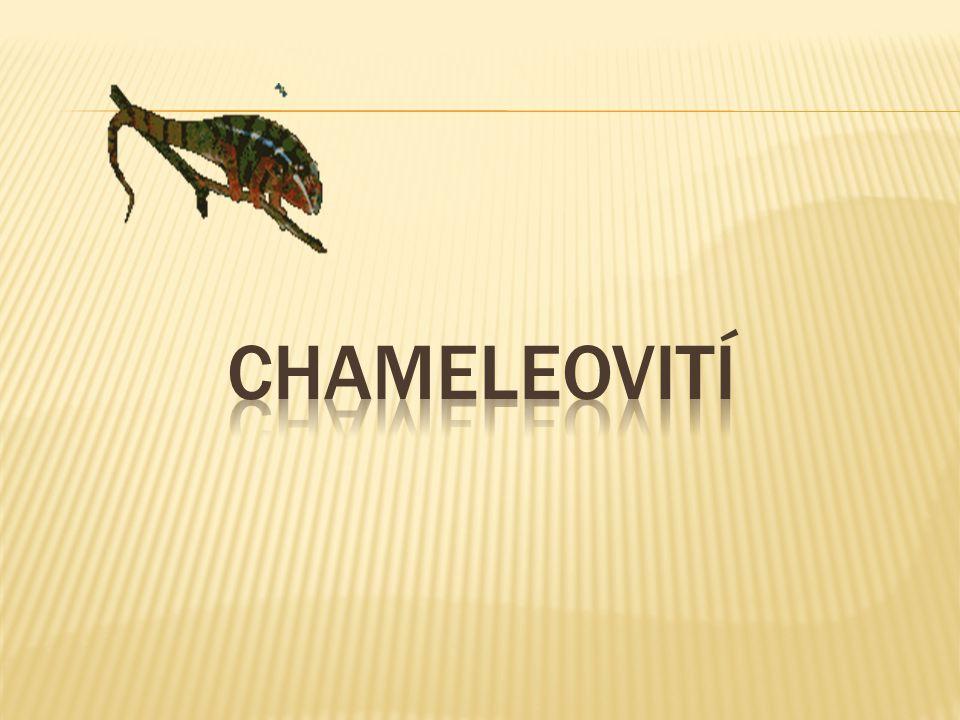 chameleovití