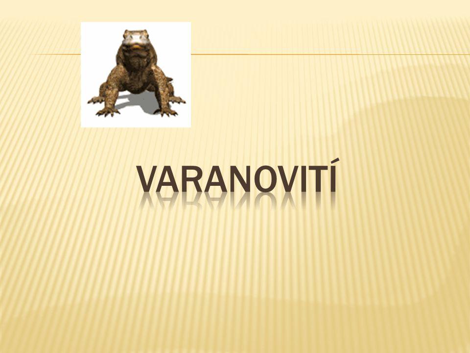 varanovití