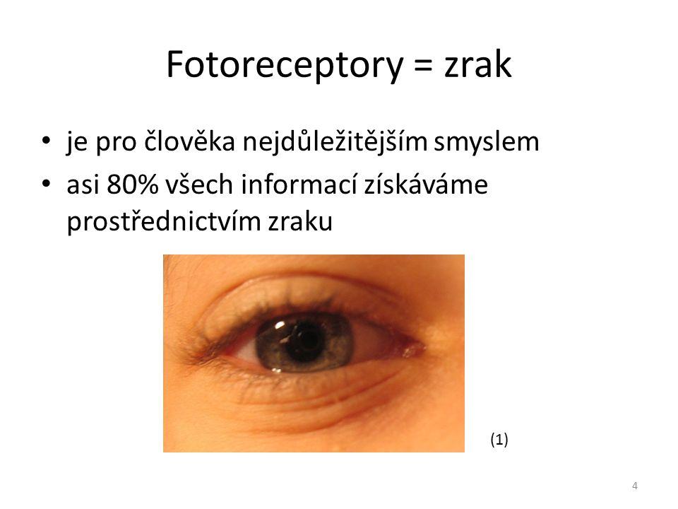 Fotoreceptory = zrak je pro člověka nejdůležitějším smyslem