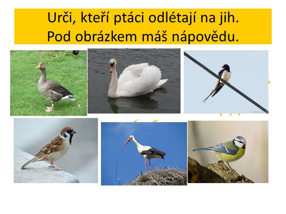 Urči, kteří ptáci odlétají na jih. Pod obrázkem máš nápovědu.