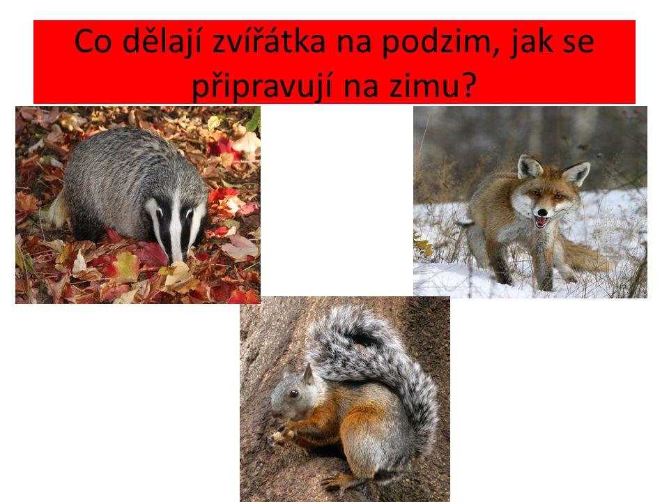 Co dělají zvířátka na podzim, jak se připravují na zimu