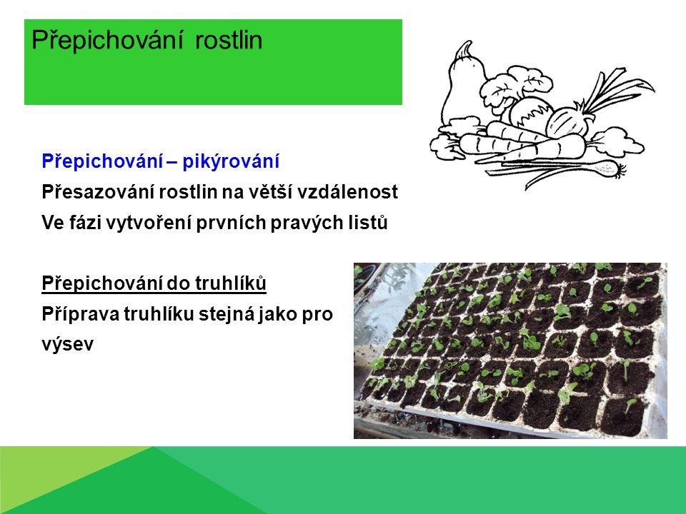 Přepichování rostlin Přepichování – pikýrování