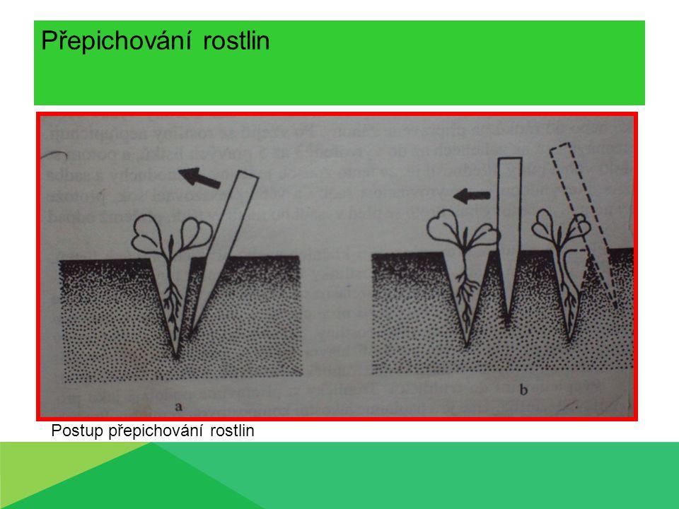 Přepichování rostlin Postup přepichování rostlin