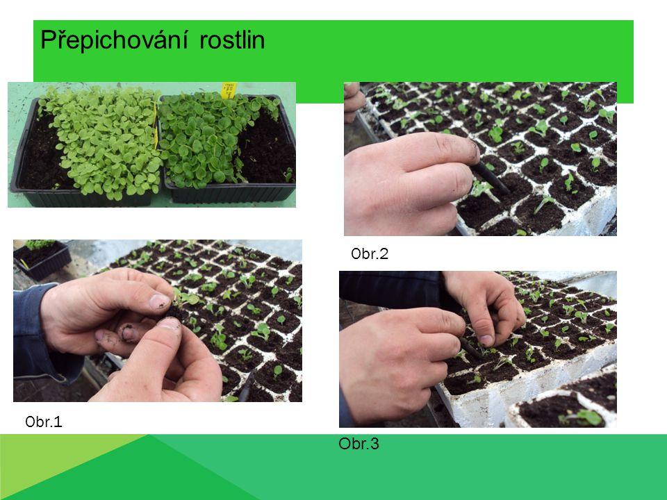 Přepichování rostlin Obr.2 Obr.1 Obr.3