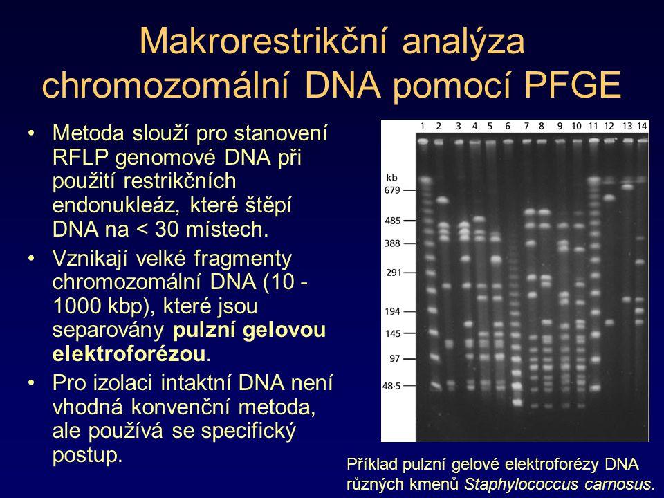 Makrorestrikční analýza chromozomální DNA pomocí PFGE