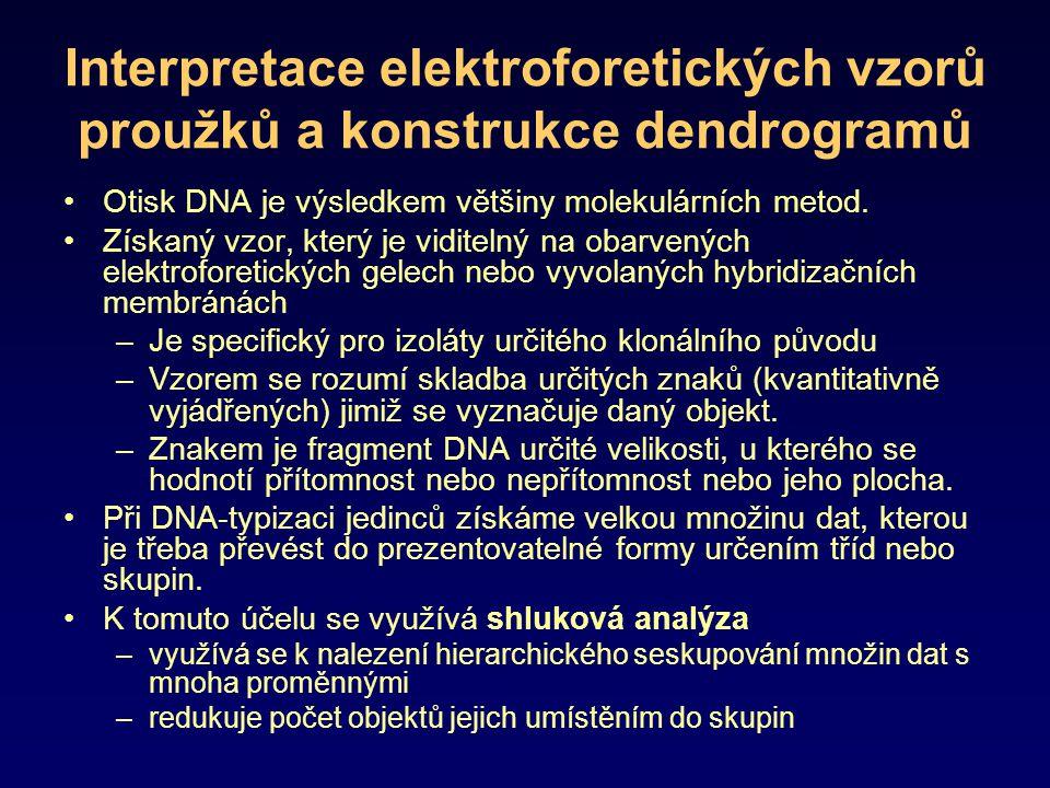Interpretace elektroforetických vzorů proužků a konstrukce dendrogramů