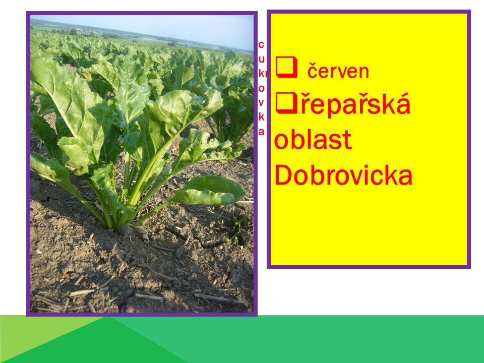 řepařská oblast Dobrovicka