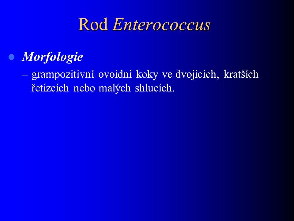 Rod Enterococcus Morfologie
