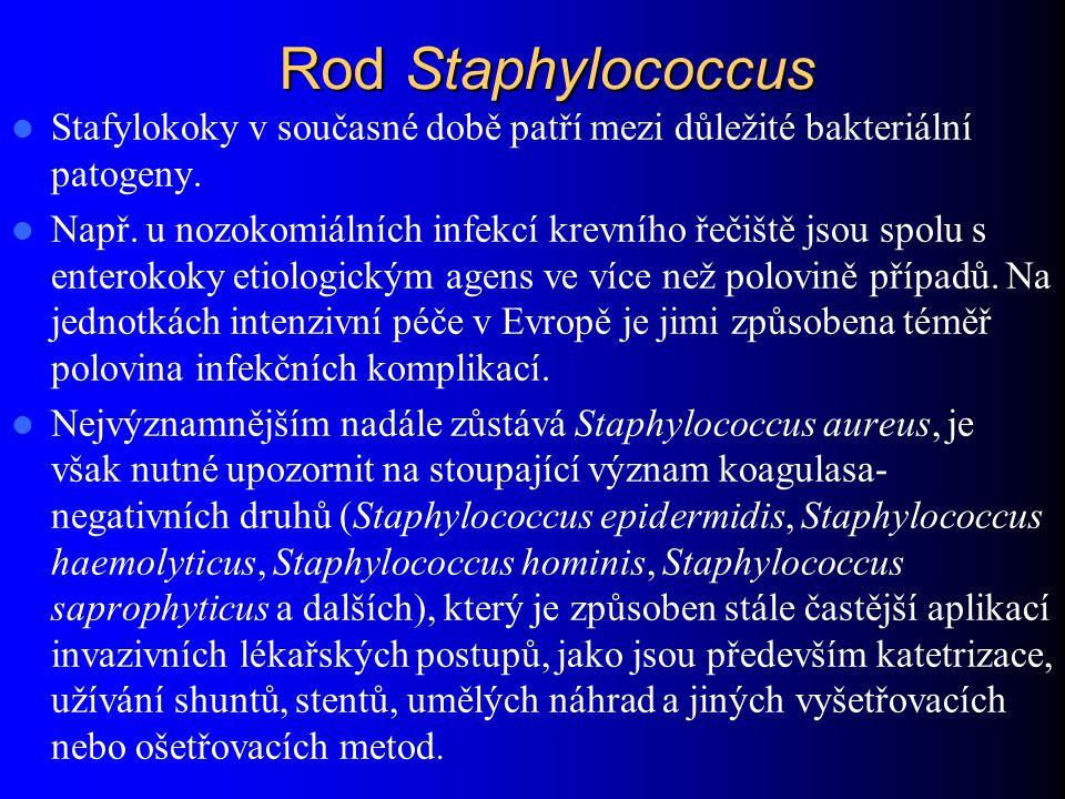 Rod Staphylococcus Stafylokoky v současné době patří mezi důležité bakteriální patogeny.