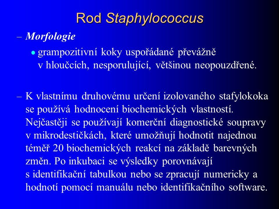 Rod Staphylococcus Morfologie