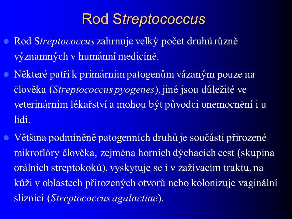 Rod Streptococcus Rod Streptococcus zahrnuje velký počet druhů různě významných v humánní medicíně.