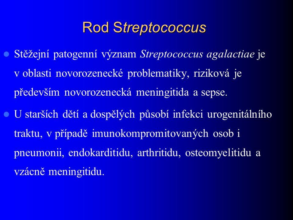 Rod Streptococcus