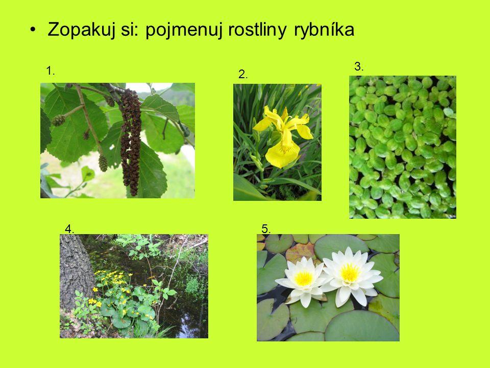 Zopakuj si: pojmenuj rostliny rybníka