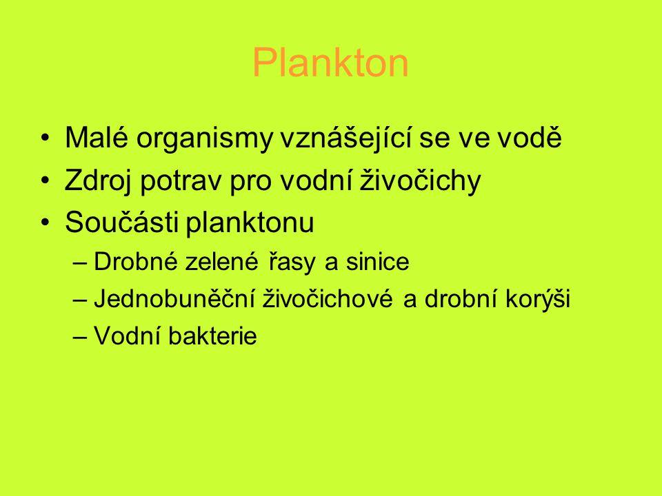 Plankton Malé organismy vznášející se ve vodě