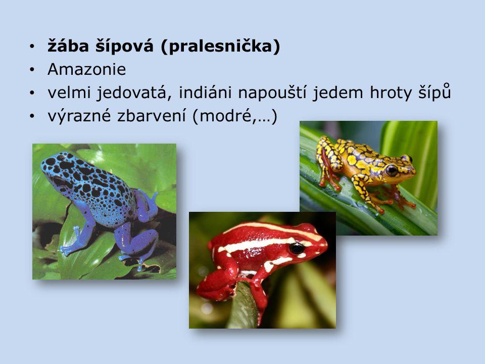 žába šípová (pralesnička)