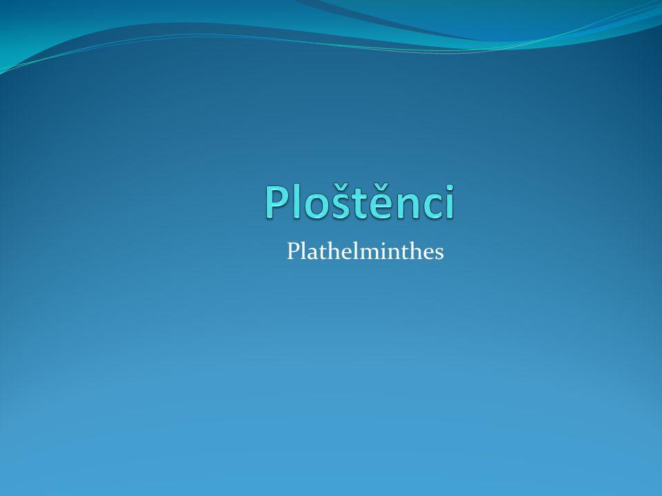 Ploštěnci Plathelminthes