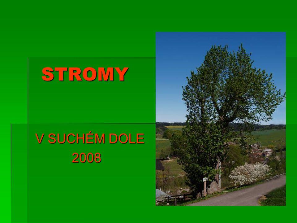 STROMY V SUCHÉM DOLE 2008