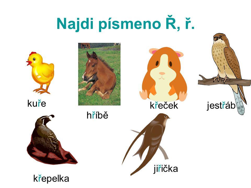 Najdi písmeno Ř, ř. kuře křeček jestřáb hříbě jiřička křepelka
