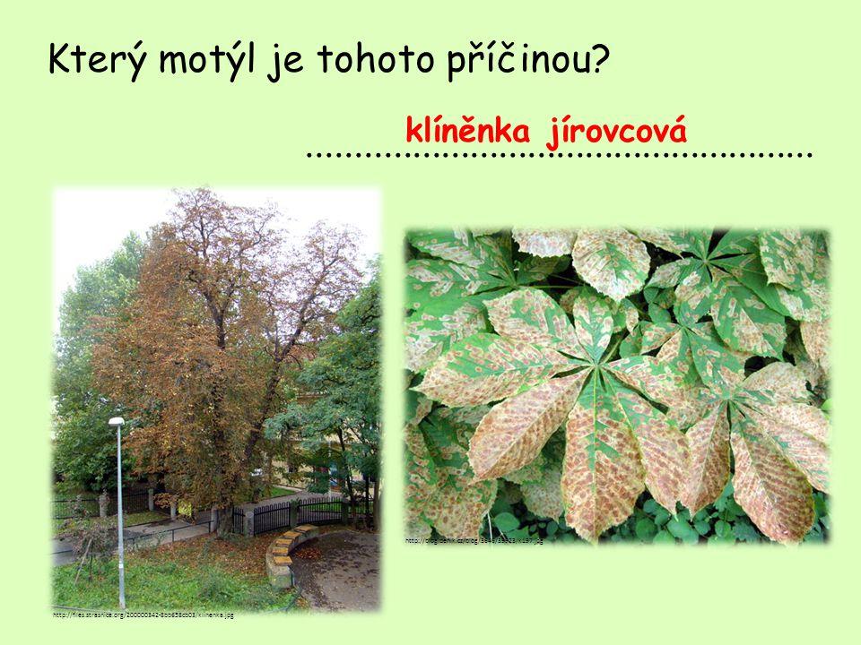 Který motýl je tohoto příčinou .....................................................