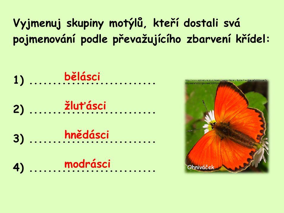 Vyjmenuj skupiny motýlů, kteří dostali svá pojmenování podle převažujícího zbarvení křídel: 1) ........................... 2) ........................... 3) ........................... 4) ...........................